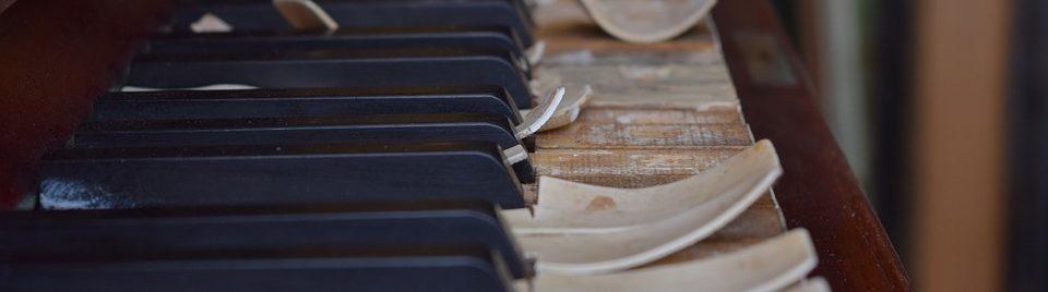 piano voor beginners kat in de zak